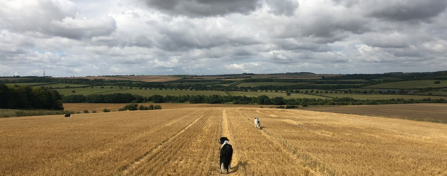 Dog in a field by Alice Robertson (cropped)